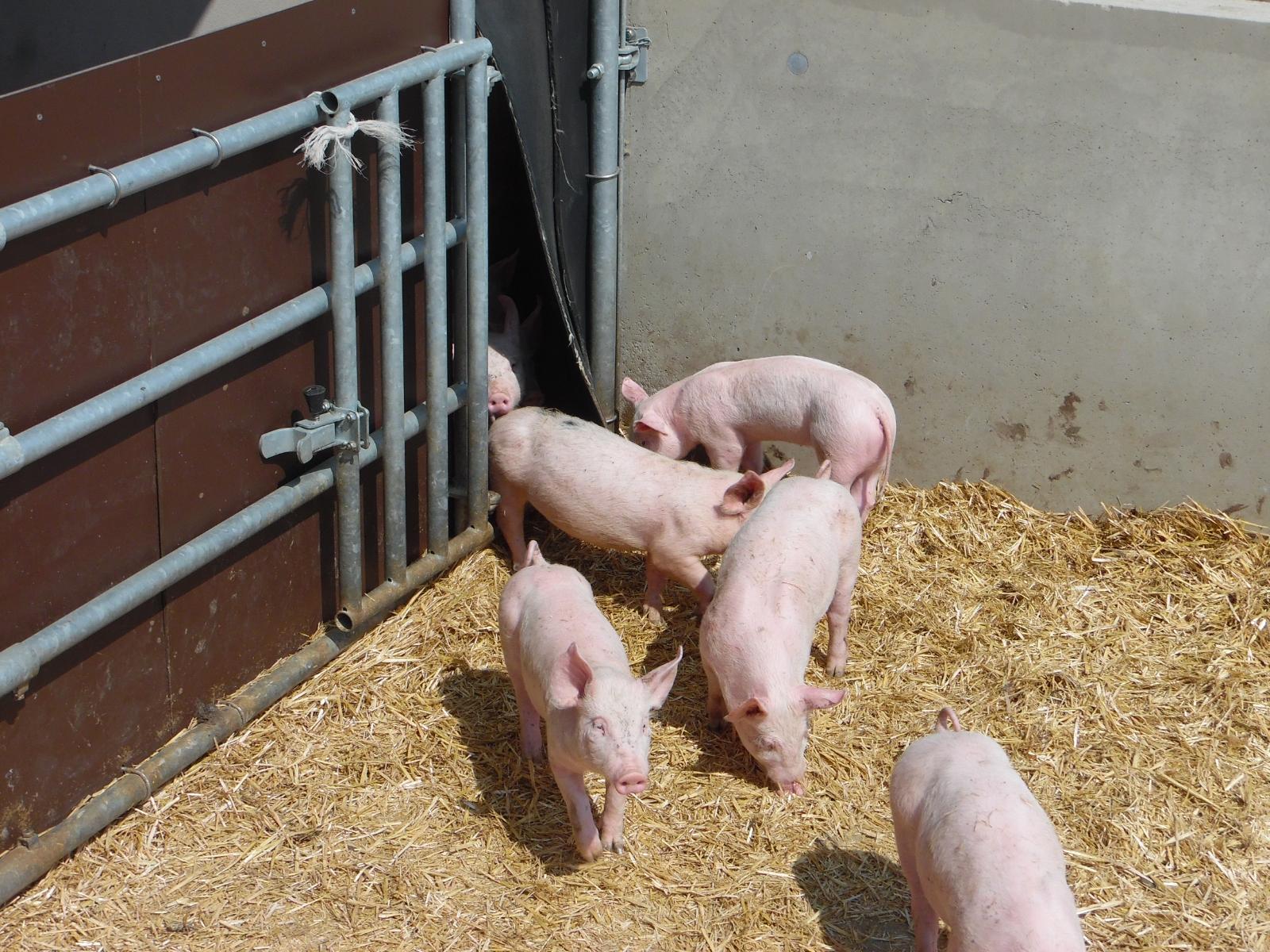 La Corbiniere Vente De Porc Mayenne Img 10