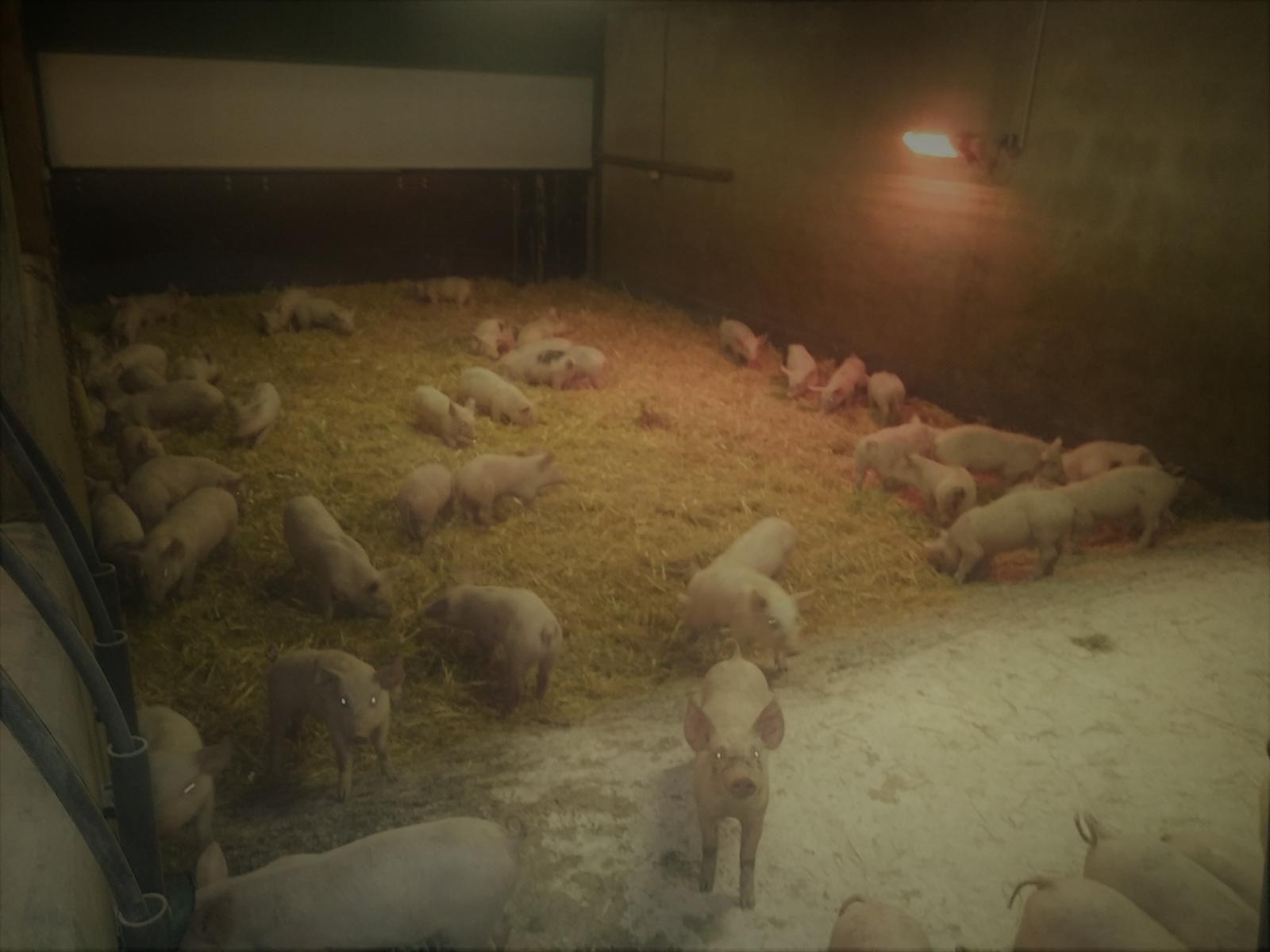 La Corbiniere Vente De Porc Mayenne Img 13
