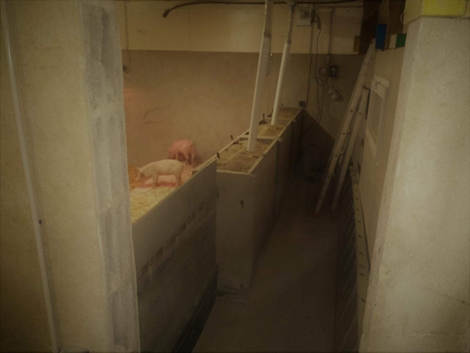 La Corbiniere Vente De Porc Mayenne Img 14