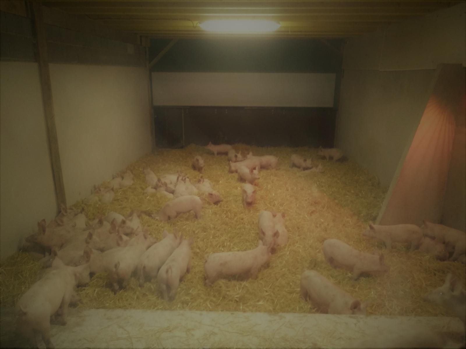 La Corbiniere Vente De Porc Mayenne Img 3