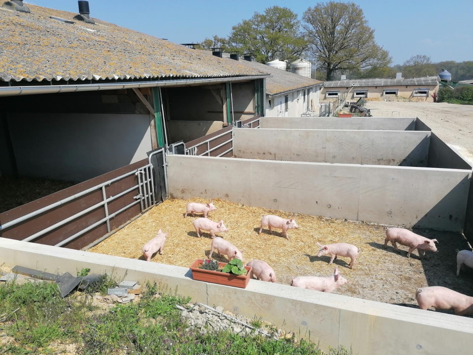 La Corbiniere Vente De Porc Mayenne Img 4