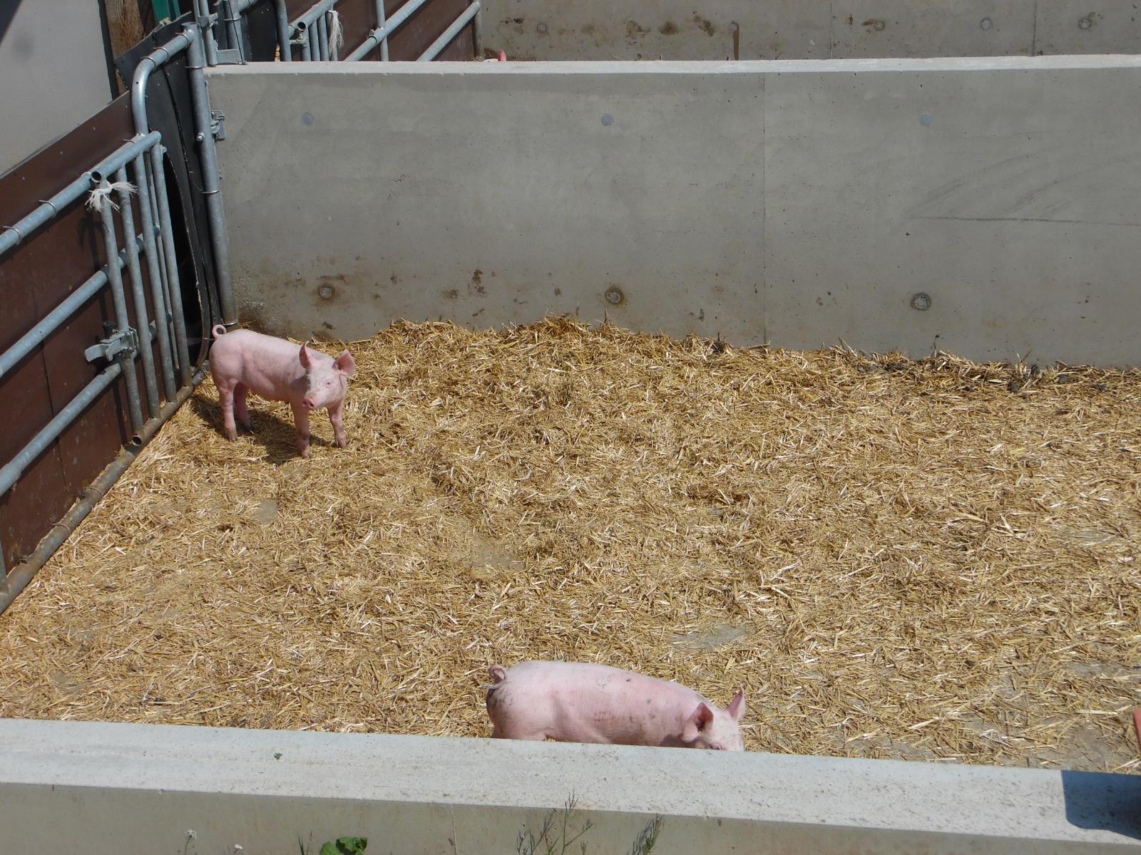 La Corbiniere Vente De Porc Mayenne Img 6