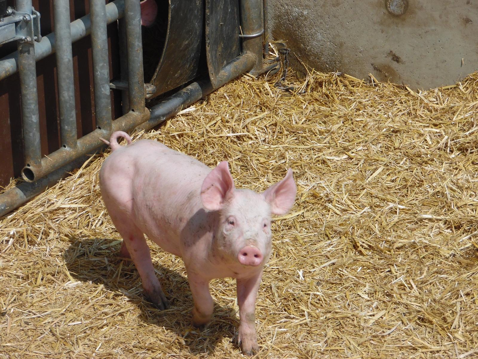La Corbiniere Vente De Porc Mayenne Img 8