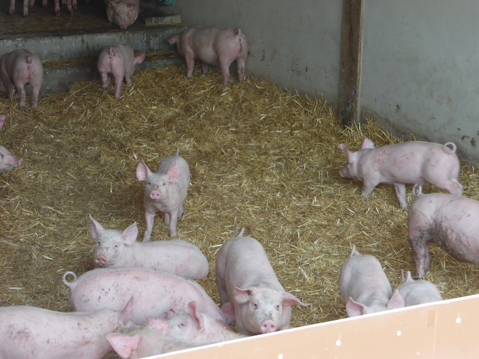 La Corbiniere Vente De Porc Mayenne Img 9